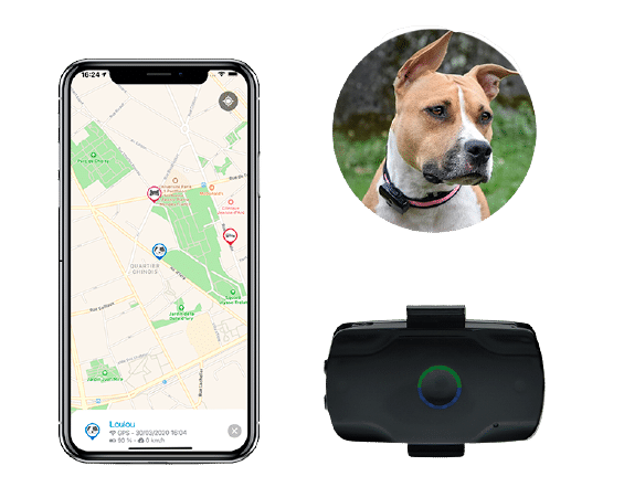 Traceur-GPS-LOOKAT-chien